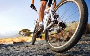 Picture bike, sport, male, mountain bike