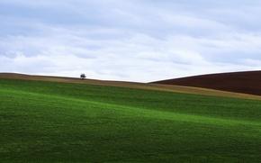 Picture field, grass, tree, lawn, hills