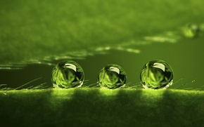 Wallpaper BACKGROUND, ROSA, WATER, DROPS, GREEN, SURFACE, PLANT, BALLS