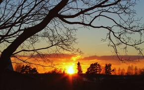 Picture the sky, the sun, clouds, trees, sunset, branches