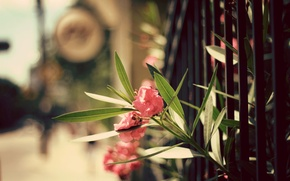 Picture leaves, flowers, the fence, petals
