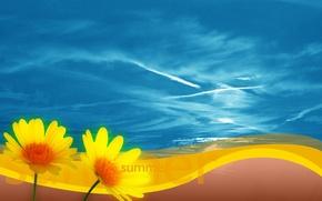 Wallpaper flowers, the sky, Summer