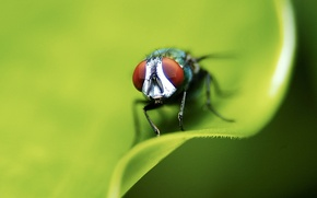 Picture sheet, green, fly