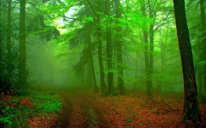Picture forest, landscape, fog, background, green