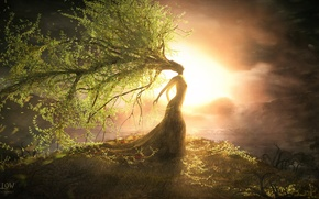 Picture leaves, girl, sunset, tree, plants, hill, art, crown, willow, steven donnet