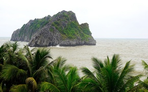 Picture sea, palm trees, island, Vietnam, national Park, Cat BA island, Cat Ba, Cat Ba island
