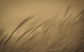 Wallpaper grass, nature, background