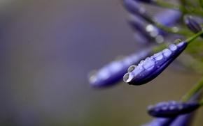 Picture flower, water, drops, macro