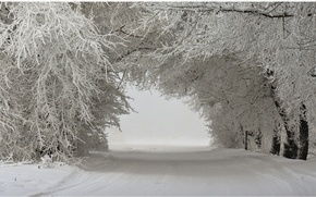 Picture snow, trees, landscape, trees in the snow, Winter landscape, winter., snow-covered road