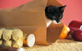 Picture cat, cat, cat