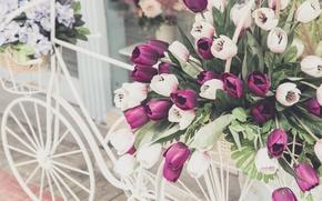 Picture flowers, bike, retro, bouquet, flowers, floral