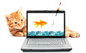 Picture cat, water, red, goldfish, laptop, rod, hook