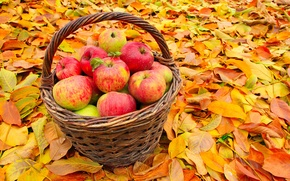 Picture autumn, leaves, basket, apples, yellow