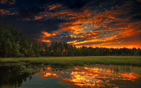 Picture forest, summer, sunset, nature, the evening