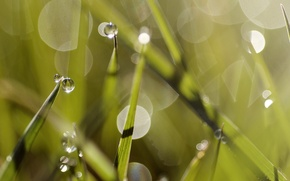 Picture dew, grass, summer, Rosa, summer, grass