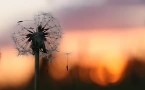 Picture macro, background, dandelion