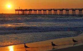 Picture sunset, seagulls, pierce