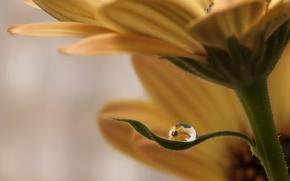 Picture flower, sheet, drop