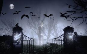 Wallpaper skull, mystic, The moon, cemetery, bat, Halloween, Ghost