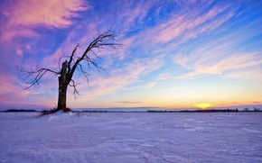 Picture tree, snow, winter, the sun, the sky, clouds, sunset