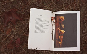 Picture text, autumn, book, leaves