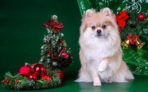 Picture tree, New year, Spitz