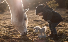 Picture horse, horse, toy, boy, horse