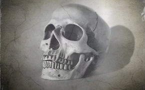 Picture background, skull, texture