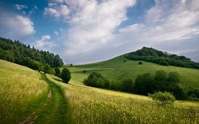 Picture field, trees, landscape, nature, hills