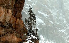 Wallpaper trees, mountains, nature, rocks, Colorado, Rocky Mountain National Park