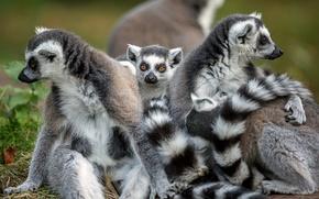Picture tails, animals, trio