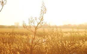 Picture nature, plant, plant light