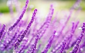 Wallpaper field, purple, macro, flowers, background, widescreen, Wallpaper, blur, wallpaper, flowers, widescreen, background, full screen, HD ...