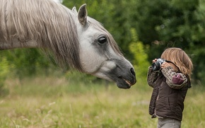 Picture face, horse, horse, boy, the camera, photographer, mane, paparazzi