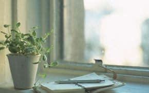 Wallpaper handle, notebook, diary, window, thinking, light, day, flower, plant, Notepad