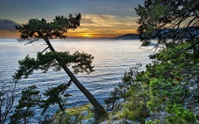 Picture trees, sunset, lake, stones, moss, the evening, Landscapes