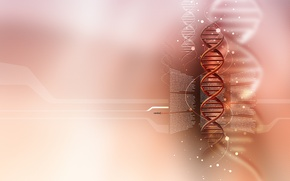 Picture light, DNA, Plasmid