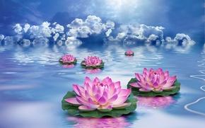 Wallpaper flowers, Lotus, the sky, water, clouds
