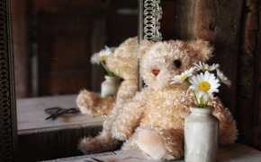 Picture flowers, reflection, toy, chamomile, mirror, bear, Teddy bear