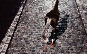 Wallpaper Horse, pavers, horseshoe