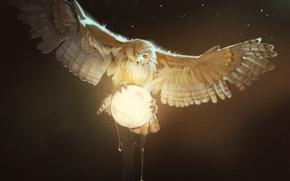Picture owl, bird, moon, Owl