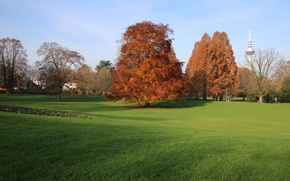 Picture Field, Autumn, Trees, Fall, Autumn, Colors, Field, Trees