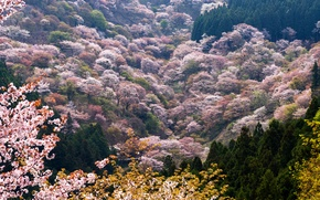 Picture trees, mountains, spring, valley, blooming