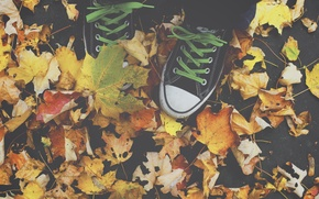 Picture All Star, autumn, leaves