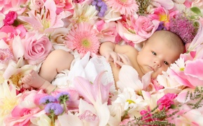 Wallpaper flowers, child, Lily, children, child, baby, roses, baby, positive, joy, schate, gerbera