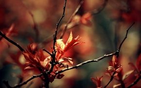 Picture macro, branches, foliage, spring