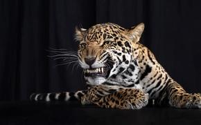 Wallpaper mustache, paws, leopard, tail