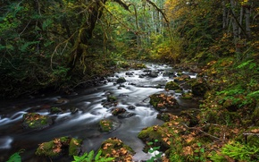 Picture autumn, forest, leaves, stream, stones, moss, fallen