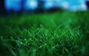 Wallpaper grass, microsemi