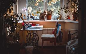 Picture cat, girls, room, window